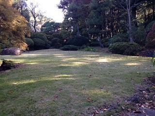 木漏れ日が射す芝生