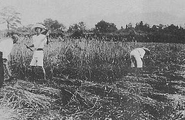 375px-Atarashiki-Mura_in_1919[1]