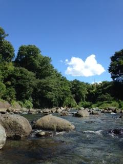 桂川から 左のこんもりしたあたりが喜寿庵