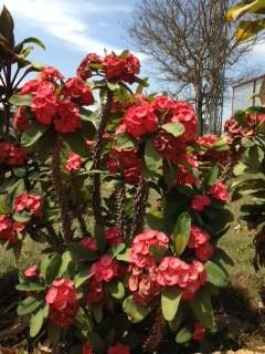 邪悪な色の花