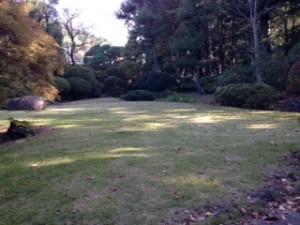 喜寿庵の木漏れ日